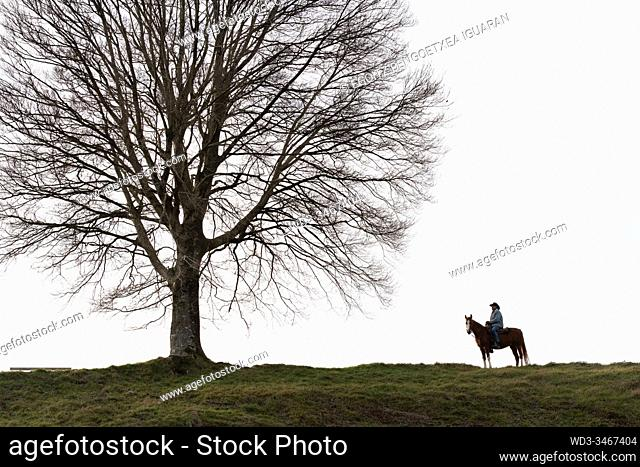 Veteran cowboy on his arabian horse in front of a lonely tree