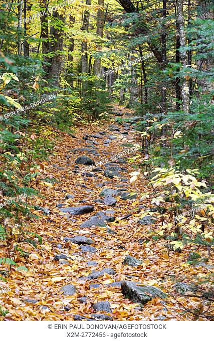 Leaf drop along the Mt. Tecumseh Trail in Waterville Valley, New Hampshire during the autumn months