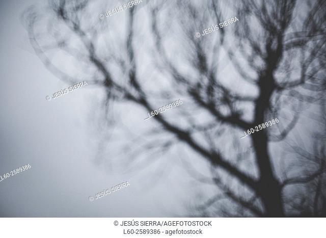 Abstact tree
