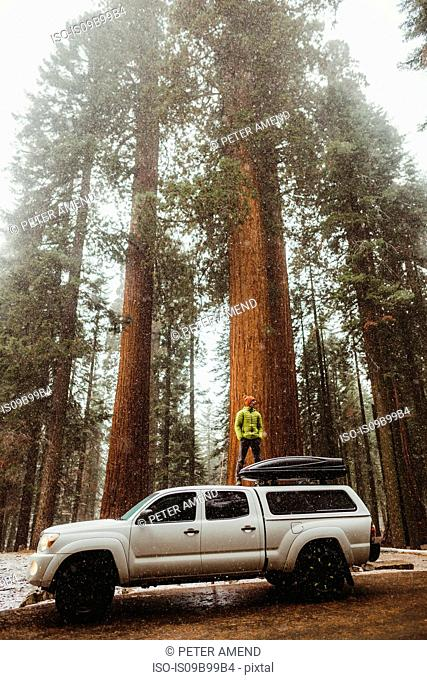 Young man standing on top of vehicle in snowy Sequoia National Park, California, USA