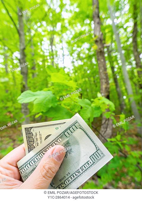 Money dollars in hand before nature