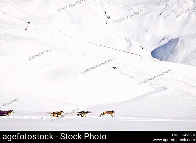sled dog, dogsledding, dog sled team