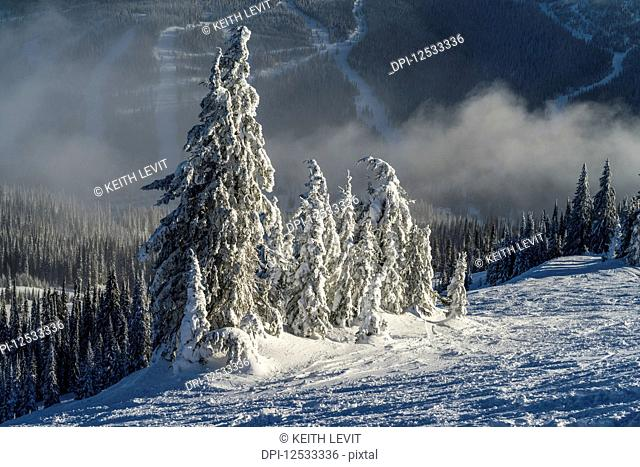 Frosty, snow-covered coniferous trees on the mountains at a ski resort; Sun Peaks, British Columbia, Canada