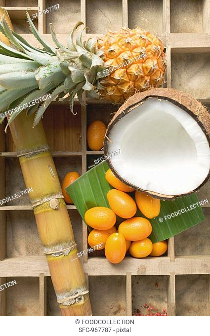 Pineapple, coconut, kumquats and sugar cane in type case