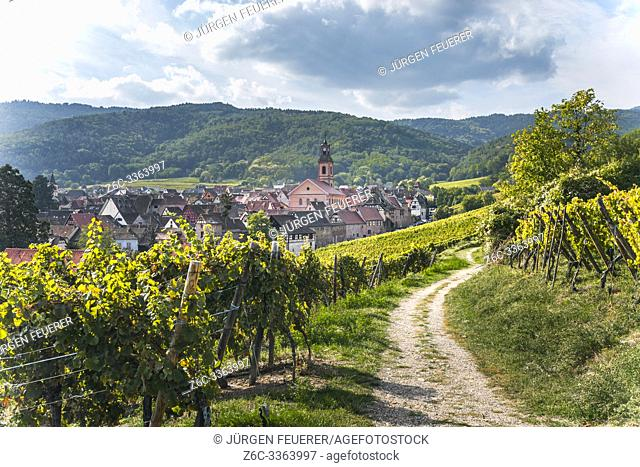 wine village Riquewihr, Alsace, Wine Route, France, foodpath and hiking root between vineyards leading to the village