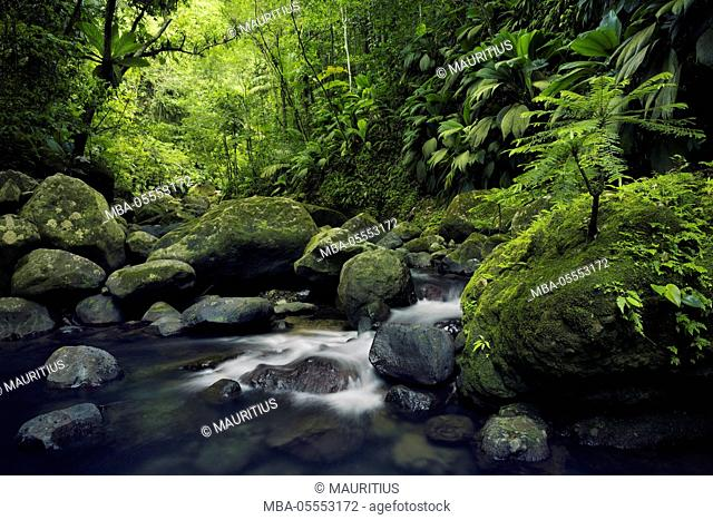Guadeloupe, the Caribbean, France, island, tropical, paradise, water, brook, jungle, green, rainforest, leaves, vegetation, lush, stones, waterfall, panorama