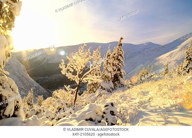 Winter scenery in Ziarska dolina, Zapadne Tatry - Rohace, High Tatras National Park