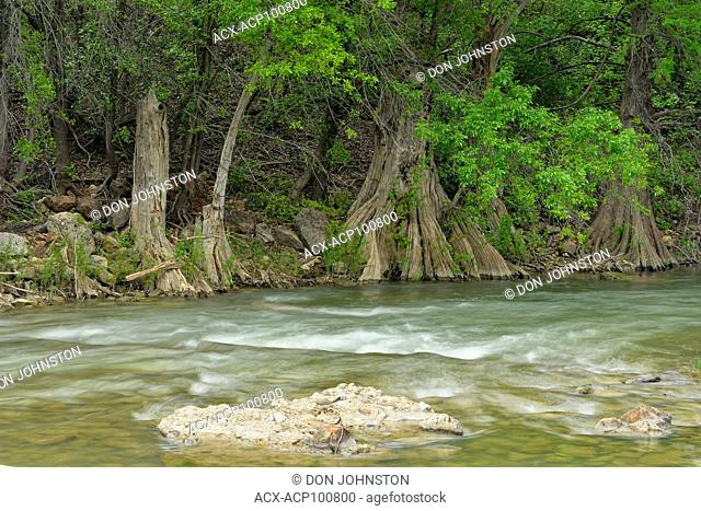 Pedernales River in spring with cypress trees, Travis County, Texas, USA