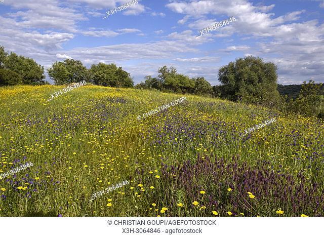Noudar Nature Park, near Barrancos, Alentejo region, Portugal, southwertern Europe