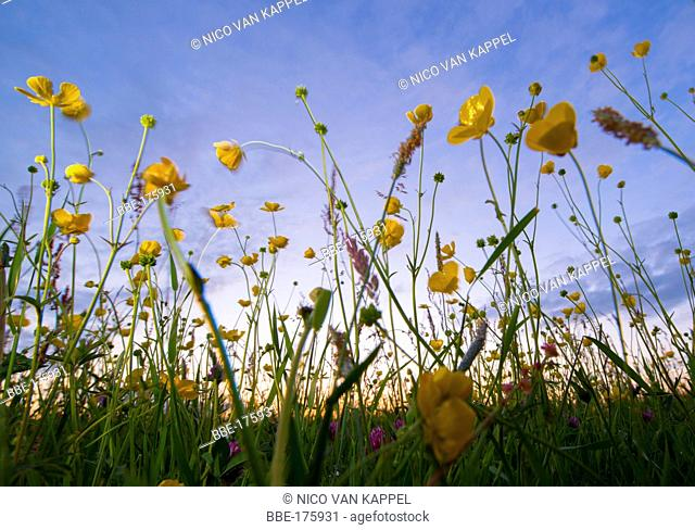 Grassland naturereserve Waalhoek at sunset