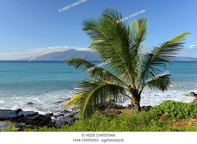 USA, Vereinigte Staaten, Amerika, Hawaii, Maui, Kaanapali, Beach and Palm