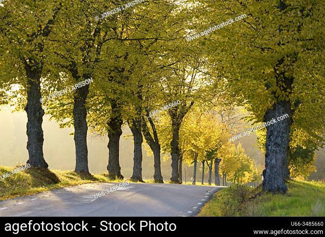 Avenue, Sturehof, Botkyrka, Sweden