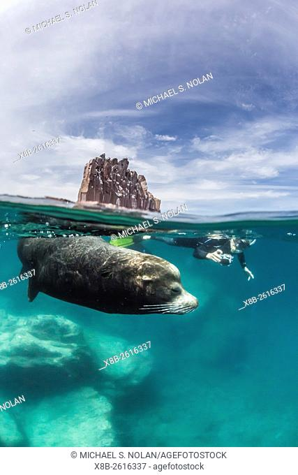 Guests from the Lindblad Expeditions ship National Geographic Sea Lion snorkeling at Los Islotes, Baja California Sur, Mexico