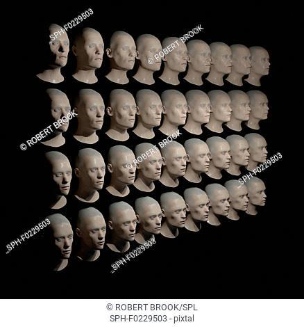 Identical heads, illustration