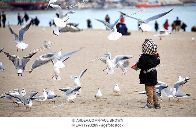 Children playing and feeding seagulls on Haeundae Beach in Busan, South Korea