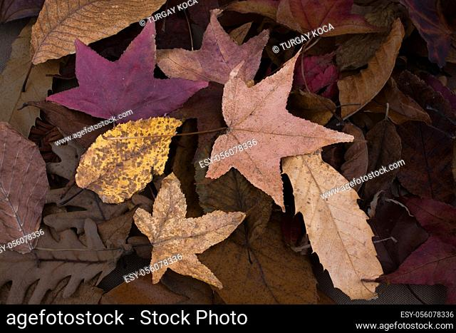 Beautiful dry leaf by a book as an autumn background