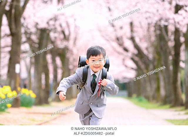 Japanese kid with cherry blossoms in a city park
