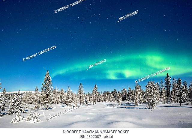 Northern Lights (Aurora Borealis) with starry sky over snow-covered trees, winter landscape, Pallastunturi, Pallas-Yllästunturi National Park, Muonio, Lapland