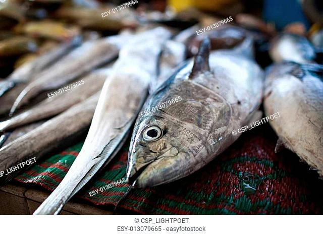 Close up of fish on display in a fish market