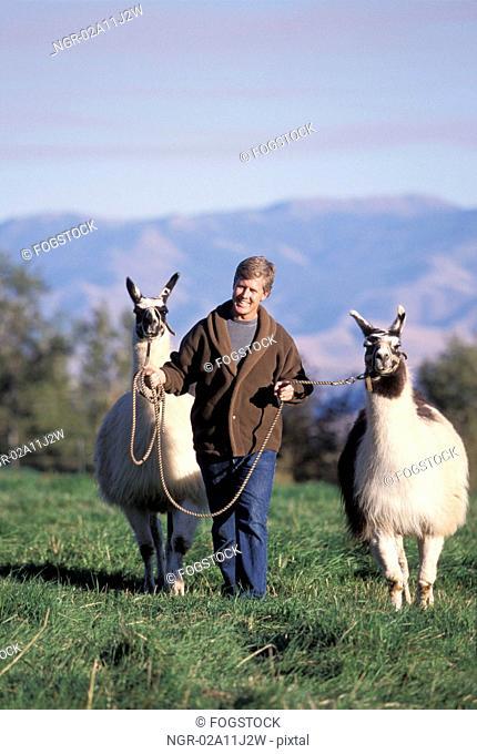 Man Walking Two Llamas