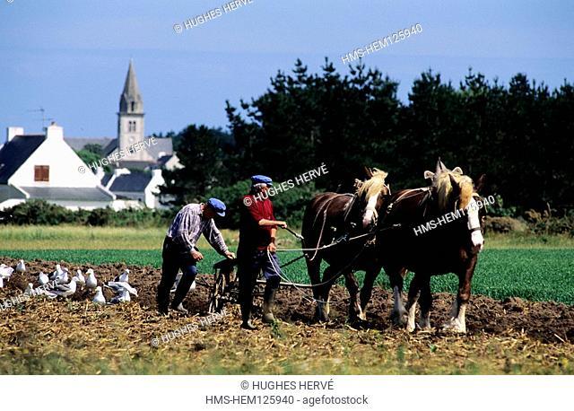 France, Morbihan, Belle Ile En Mer, Ploughmen and Seagulls in Bangor Village
