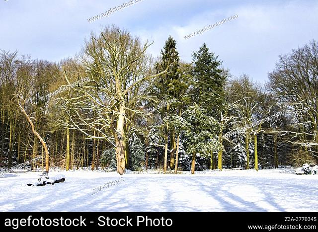 Dutch winter landscape with snow, The Netherlands, Europe