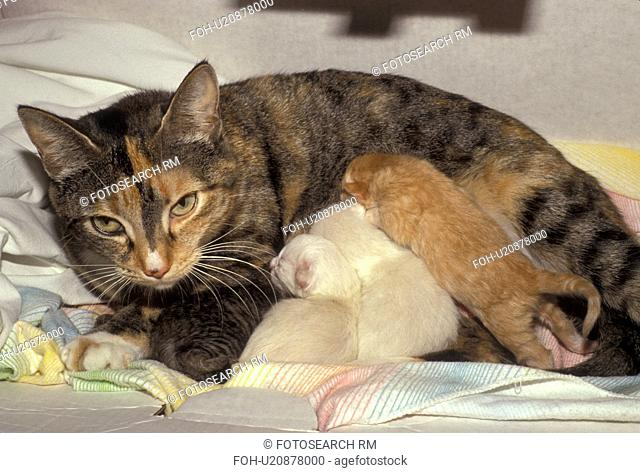 cat, A mother cat feeding her baby kittens