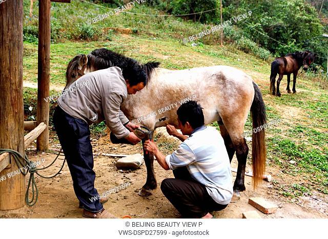 Blacksmith nailing horseshoes