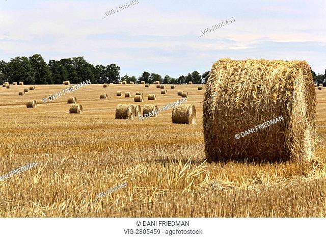 Bales of hay in a wheat field during harvest time in Ontario, Canada. - INNISFIL, ONTARIO, CANADA, 13/08/2011