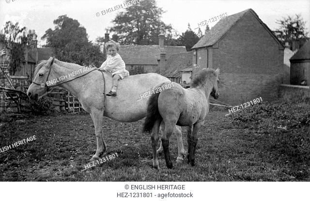 Child, horse and pony, Snitterfield, Warwickshire, c1896-c1920. A small child on a horse in a paddock at Snitterfield, Warwickshire