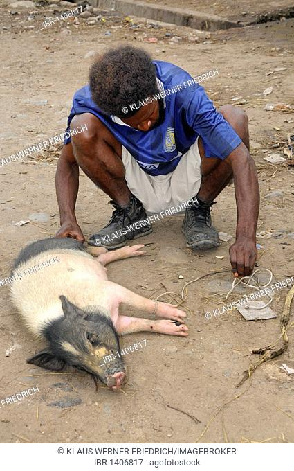 Dani offering a pig for sale in the market square in Wamena, Baliem Valley, Irian Jaya, West Papua, Island of Papua New Guinea, Indonesia, South-East Asia, Asia