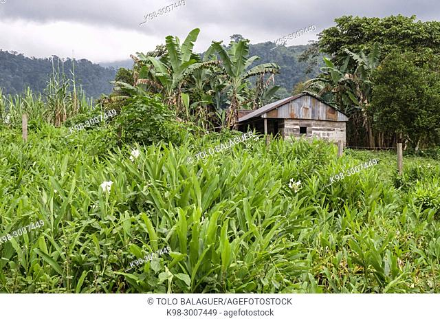 casa en el pantanal, Lancetillo - La Parroquia, Franja Transversal del Norte , departamento de Quiché, Guatemala