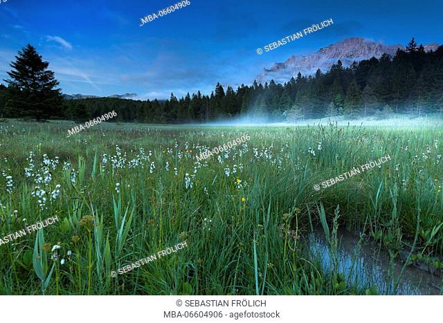 Fog rises in the bog meadows on the Lautersee (lake), in the background the Karwendel (mountain) and in foreground different blossoms and a puddle