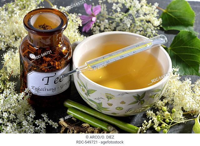 Colds and Influenza tea, Lime Tree blossom, Elderflower, Elderberry, Mallow leaf, Mallow, Common Mallow, Liquorice root, European elderberry, Elder