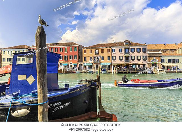 Seagull watching in the canal while a fishing boat passes. Murano, Venice, Veneto, Italy