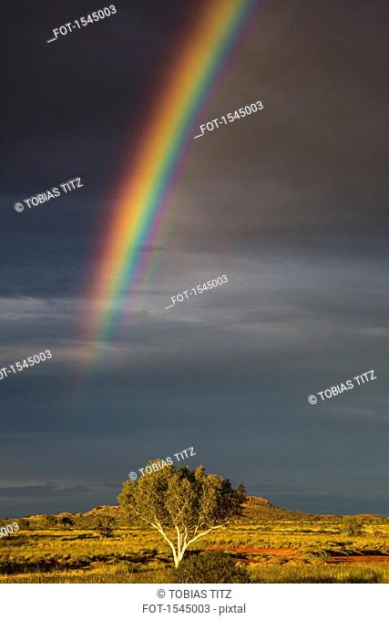 Scenic view of rainbow over tree growing on grassy field, Newman, Western Australia, Australia