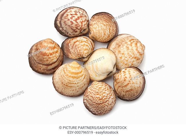 Dog cockles on white background