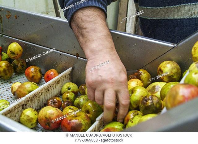 Process of selection of apples to make cider. Sidrería Urbitarte, Ataun, Guipuzcoa, Basque Country, Spain