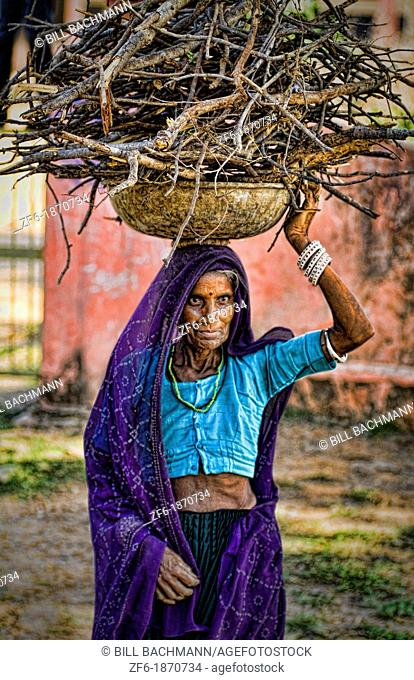 Woman carrying firewood on head in jungle of Ranthambore National Park in Rajastan India