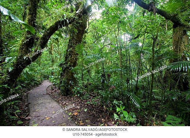 Monteverde Cloud Forest Preserve, Santa Elena, Costa Rica