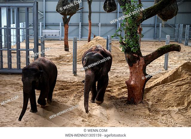 ZSL Whipsnade Zoo opens the new Centre for Elephant Care Featuring:  Atmosphere, Stock Photo, Picture And Rights Managed Image. Pic.  WEN-WENN31305159 | agefotostock