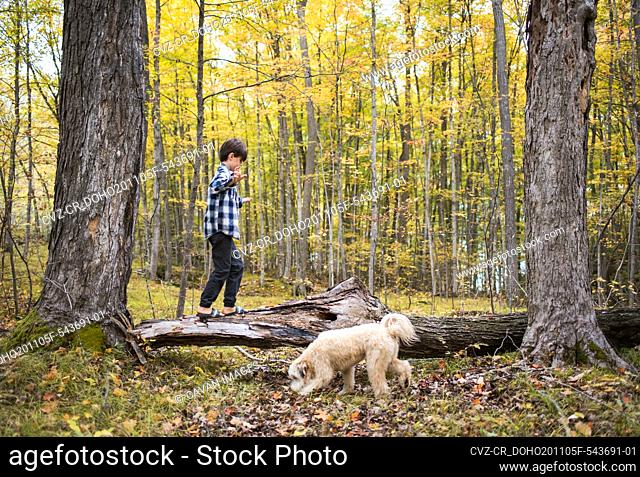 Young boy climbing on fallen tree in woods with his dog on fall day
