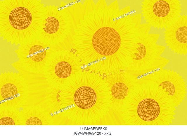 Sunflowers, close-up