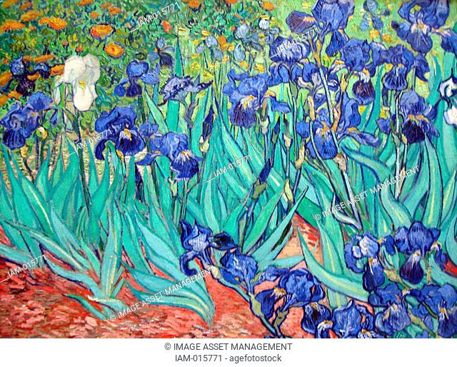 Irises is a painting by Vincent van Gogh 1853 – 1890, Dutch post-Impressionist painter. Irises was painted while Vincent van Gogh was living at the asylum at...