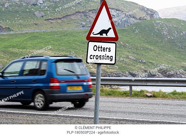Eurasian otter / European otter (Lutra lutra) road warning sign for otters crossing street in coastal Scotland, UK