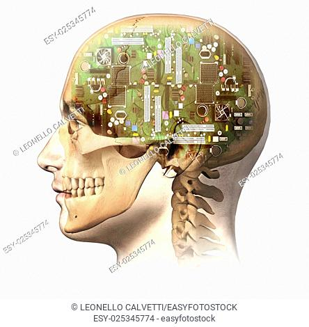 Male human head with skull and artificial electronic circuit brain in ghost effect, side view. Anatomy image, on white background, with clipping path