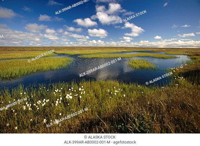 Arctic Tundra & Cotton Grass Summer Scenic North Slope Alaska