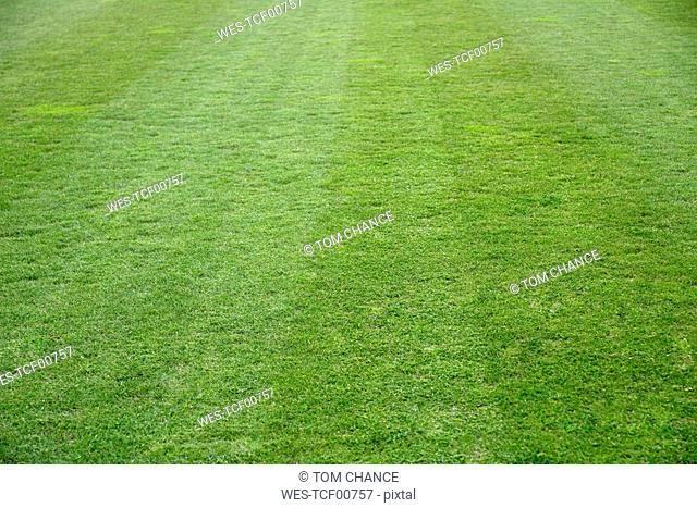 Soccer pitch lawn