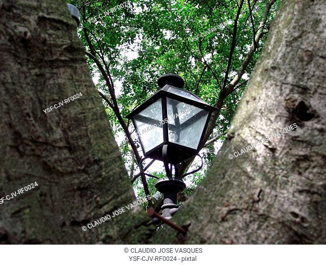 Lamp, Tree, Rio de Janeiro, Brazil