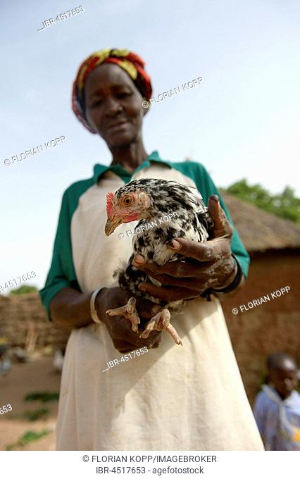 Woman, farmer holding chicken in hand, Toeghin village, Oubritenga province, Plateau Central region, Burkina Faso